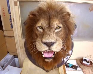 ライオン特殊造形1