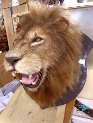 ライオン特殊造形2