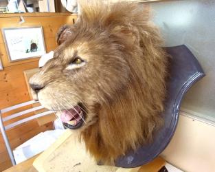 ライオン特殊造形3