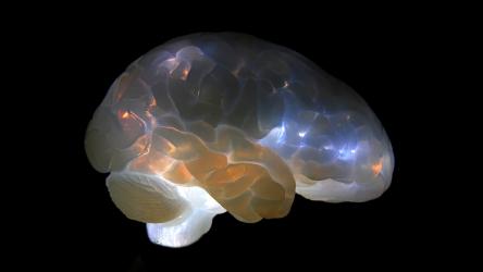 brain1 photo-Sho-ichiro Matsuoka
