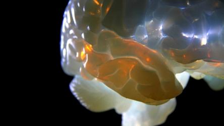 brain3 photo-Sho-ichiro Matsuoka