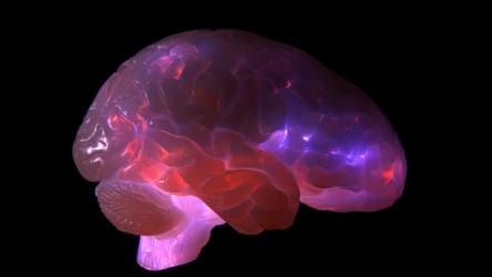 brain4 photo-Sho-ichiro Matsuoka